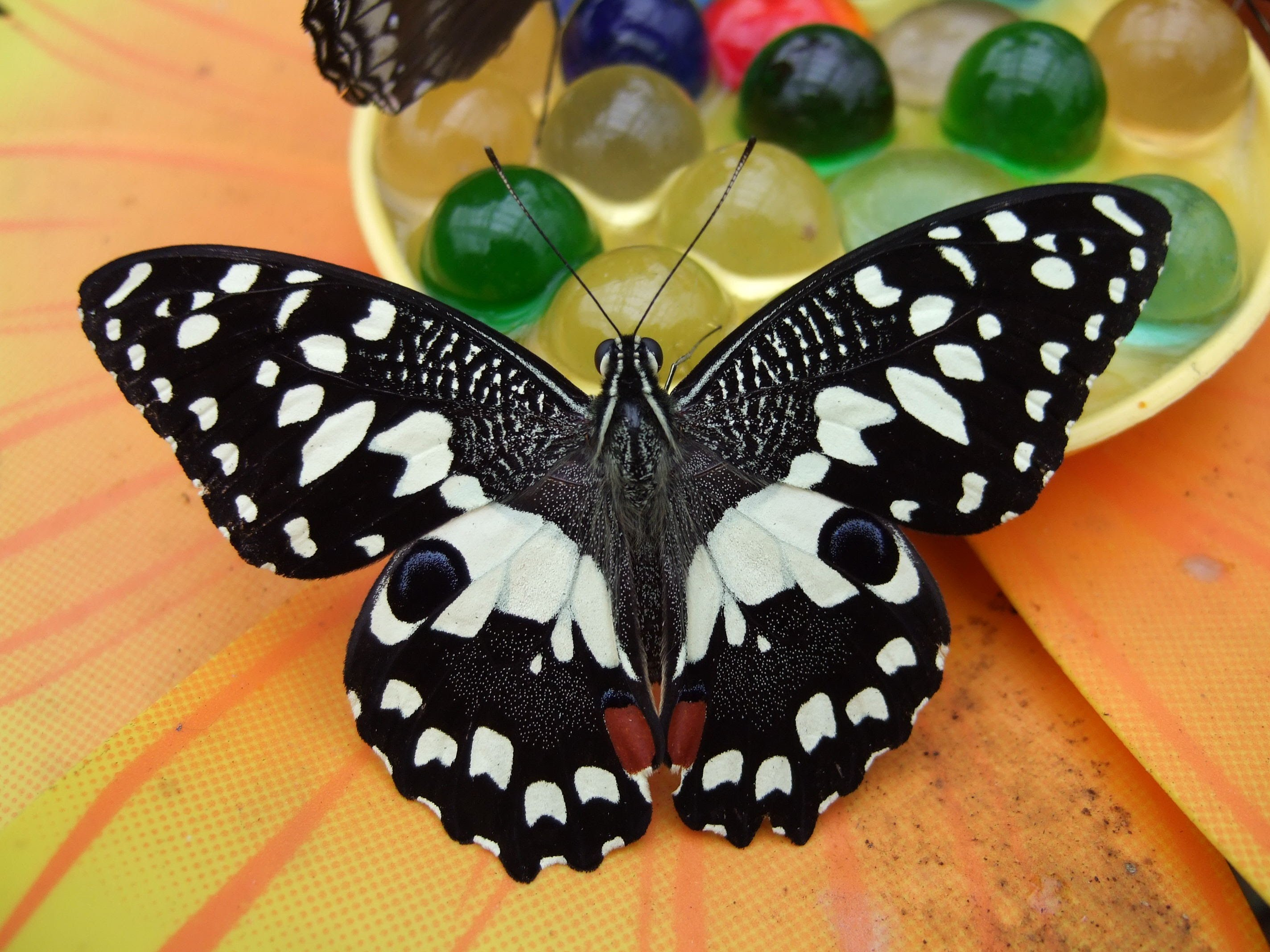 Con i bambini alla casa delle farfalle co alberghi - Immagini di farfalle a colori ...