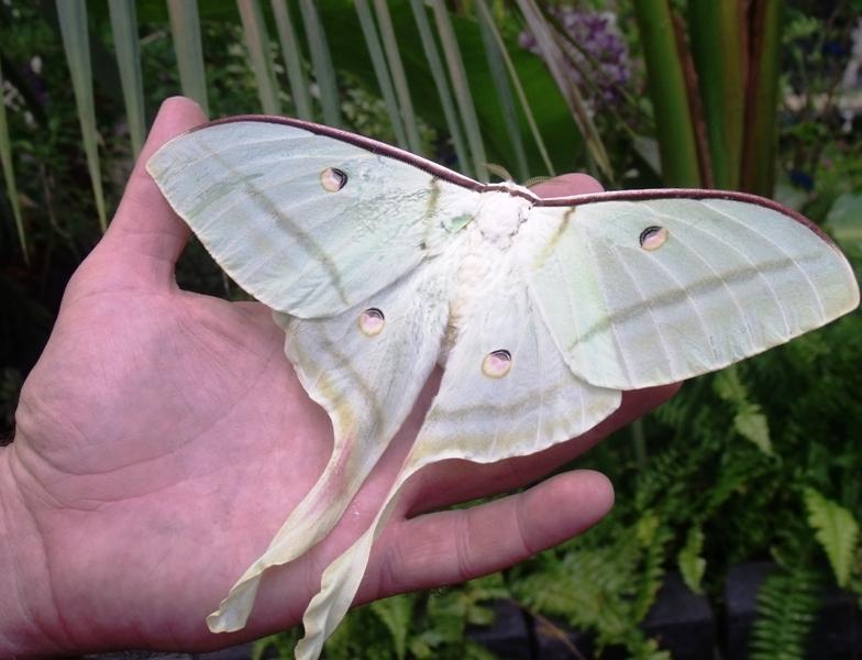 Casa farfalle Cervia