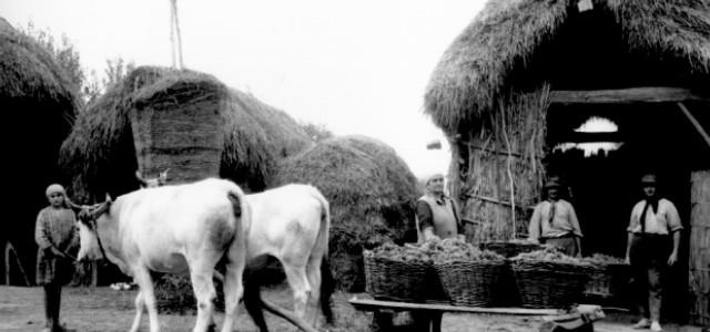 Alla scoperta della cultura contadina nelle campagne riminesi.