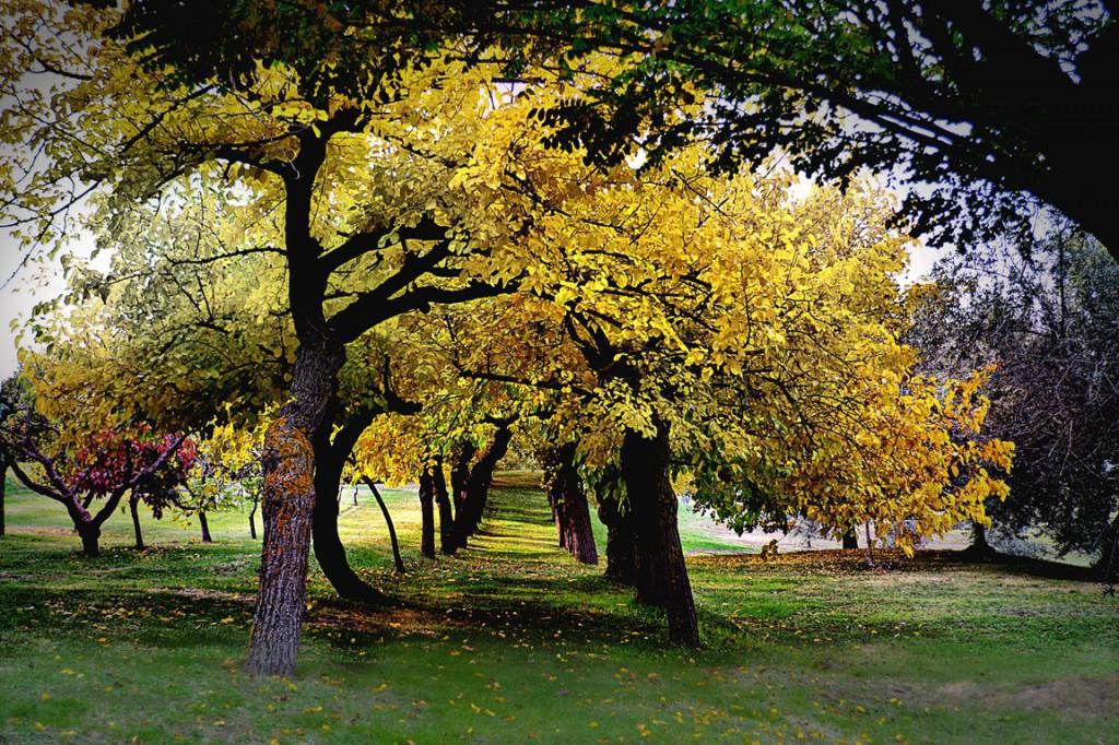 Viale_dei_Gelsi_in_autunno