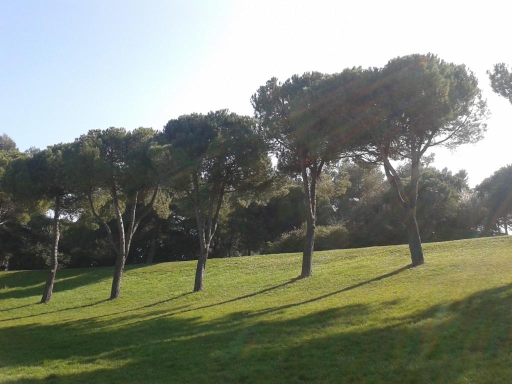 alberi_parco_cava_rimini