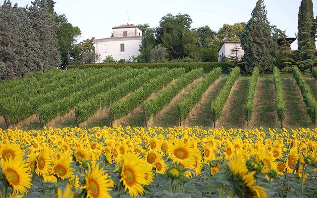 azienda-vinicola-Rimini