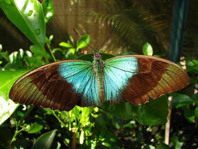 casa-delle-farfalle