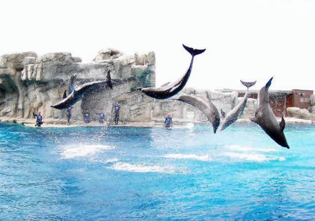 delfini_oltremare